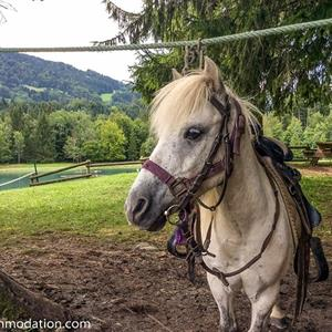 Lakeside Summer Fun in Samoens Pony rides