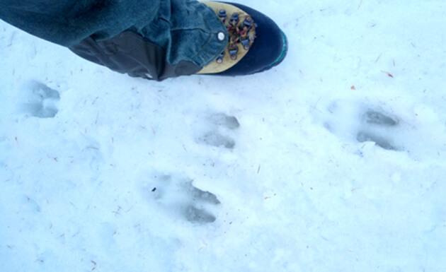 Fresh tracks in Samoens and the Grand Massif!